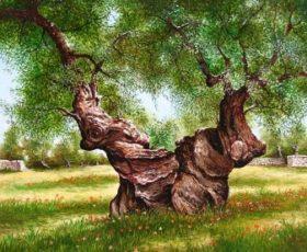 Martano al tempo della crisi dell'olivo