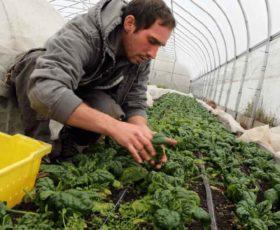 Agricoltura: cresce l'occupazione. Aumento dei posti di lavoro in Puglia
