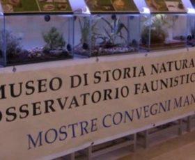Il Museo di Storia Naturale di Calimera, una sconosciuta eccellenza del territorio