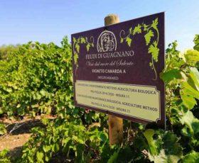 Record Vini Bio, Puglia 2° regione d'Italia con 10900 ettari coltivati