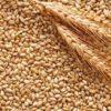 Coldiretti Puglia: fuori i nomi di chi importa grano estero