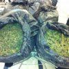 Traffico di marijuana dall'Albania al Salento, arrestati in 14