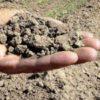 Siccità: morsa del caldo sulle campagne. Sfiorati i 40° gradi