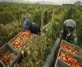 ANCORA IN CAMPO! Parte il Camper dei Diritti per aiutare i lavoratori agricoli