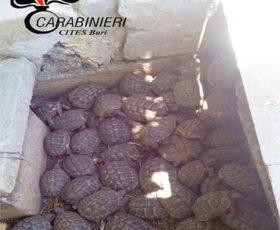 Castrignano dei Greci, sequestrate centinaia di tartarughe e pappagalli in via di estinzione