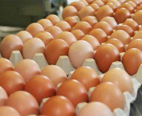 Uova al Fipronil nel Salento, ritirate oltre 4.000 uova contaminate