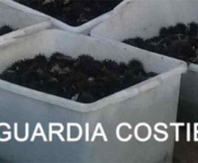 Pescano ricci in area protetta: denunciati e sanzione di 8000 euro