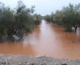 Maltempo nel Salento, inizia la conta dei danni sulle colture