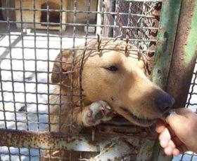 """500 euro a chi adotta un cane. Il Comune di Nardò abbraccia il progetto """"svuota"""" canili"""