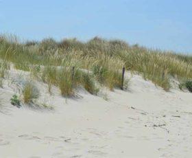 Distrugge la duna con la pala, sbancato un tratto in area protetta