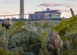 'Vento di soave': il film di Corrado Punzi racconta le centrali di Brindisi e i danni ambientali