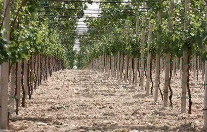 """Regione finanzia la legge sul Km0. Coldiretti: """"Sterzata azzera burocrazia in agricoltura"""""""