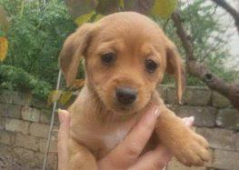 Leverano, sette cuccioli di cane scomparsi nel nulla